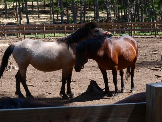 木曽馬の里と木曽馬たち10