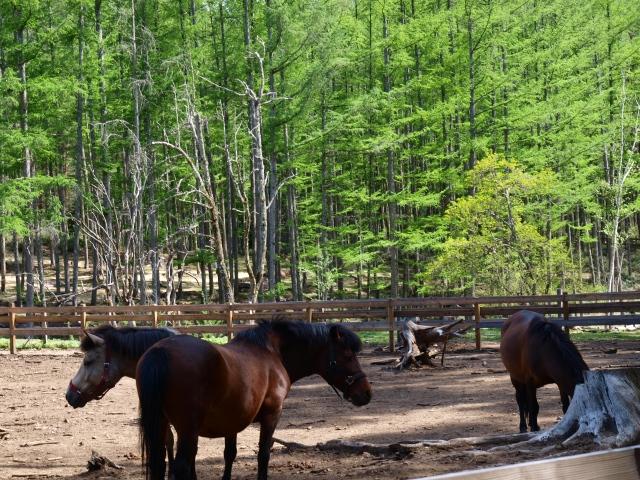 木曽馬の里と木曽馬たち11