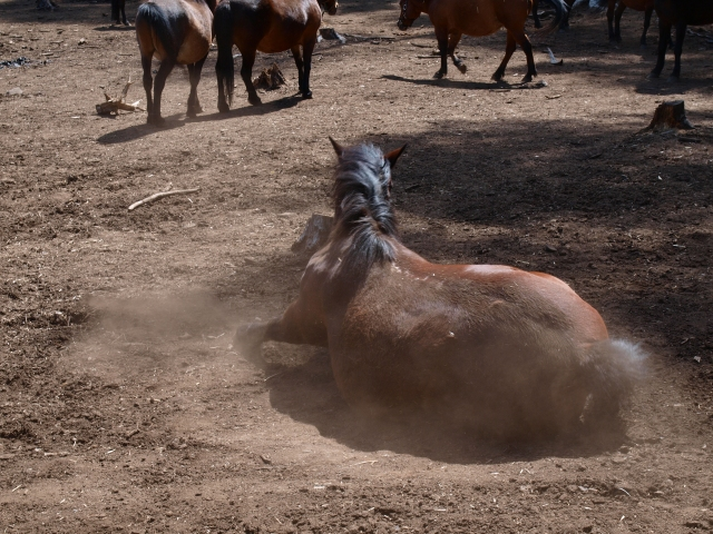 木曽馬の里と木曽馬たち12