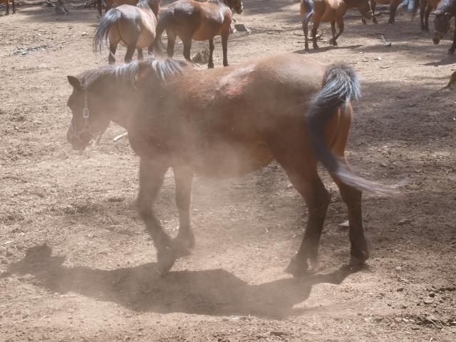 木曽馬の里と木曽馬たち13