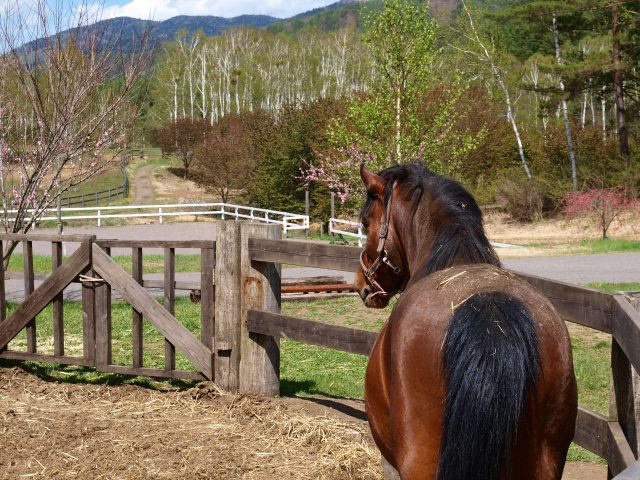 木曽馬の里と木曽馬たち14