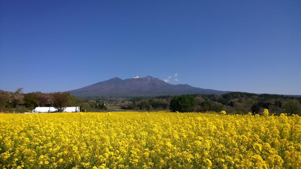 菜の花畑越しに八ヶ岳2