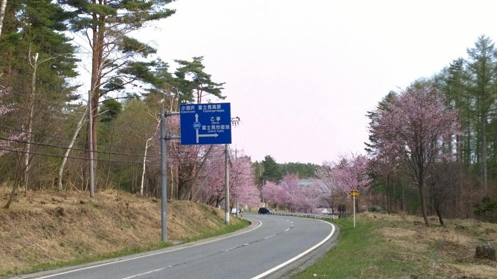 鉢巻道路の桜20140504