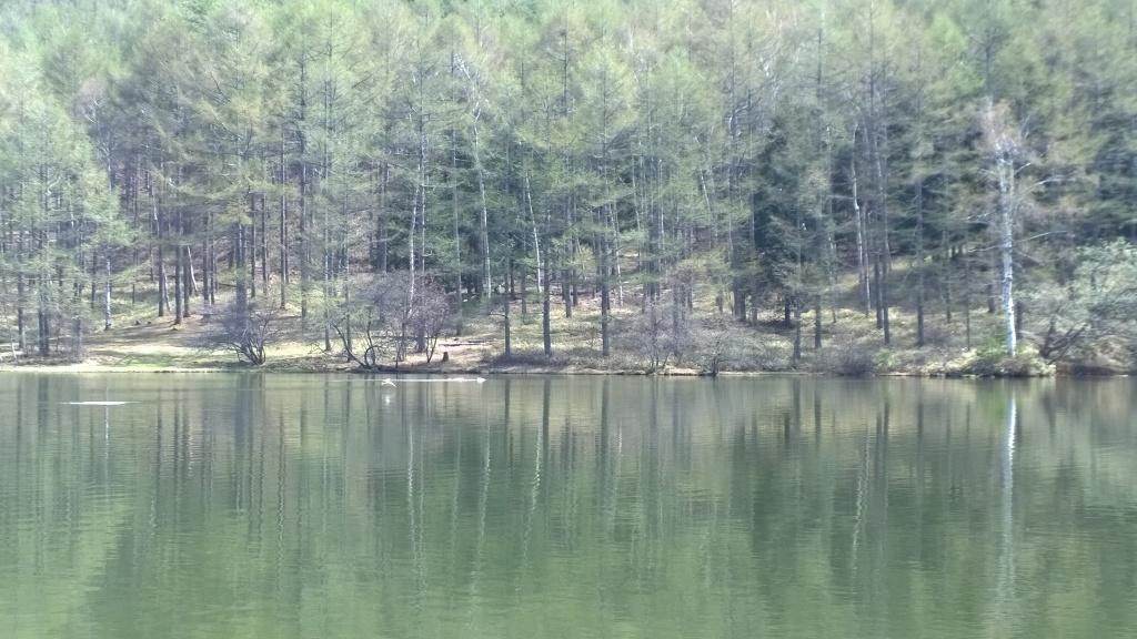 新緑の千代田湖1