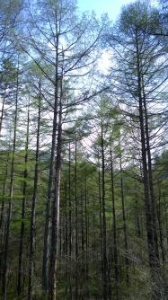 日影入林道