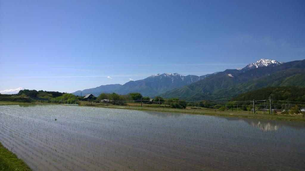 田植えの終わった水田と南アルプスの山並み
