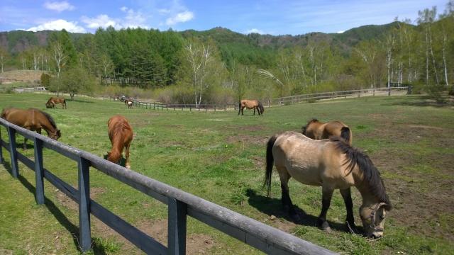 木曽馬の里と木曽馬たち1