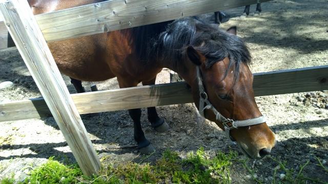 木曽馬の里と木曽馬たち2