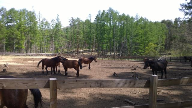 木曽馬の里と木曽馬たち3