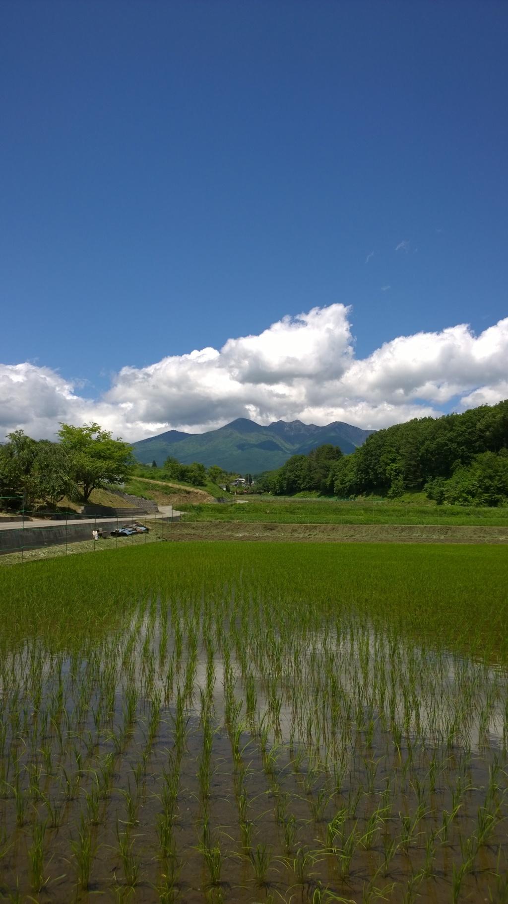 夏の入り口、水田と八ヶ岳