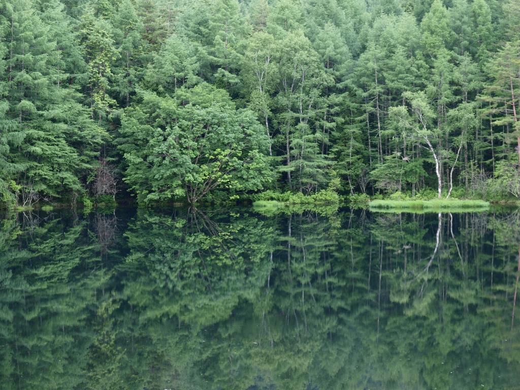 緑深まる御射鹿池