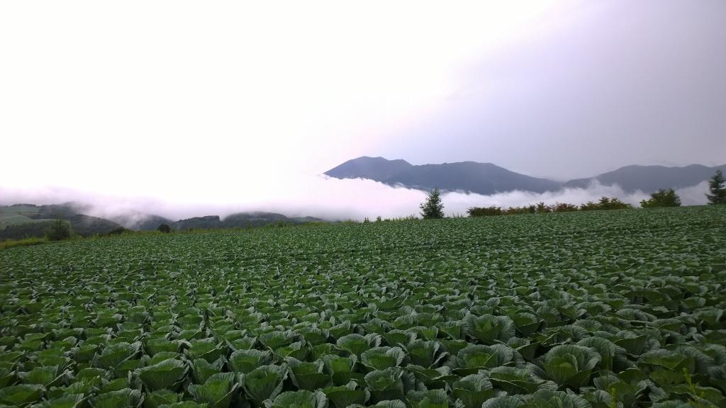 嬬恋村のキャベツ畑から浅間山を2