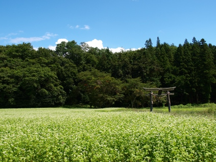 池生神社の蕎麦畑