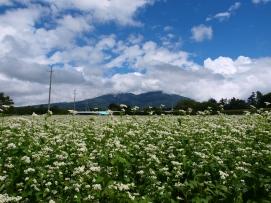 乙事の蕎麦畑から八ヶ岳を遠望