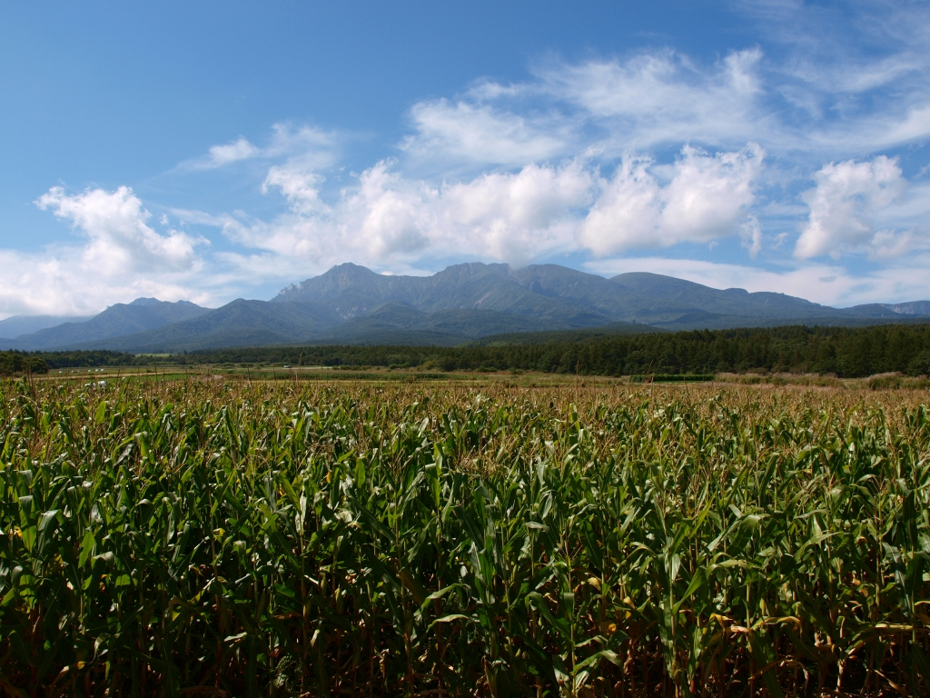 トウモロコシ越しに秋の八ヶ岳