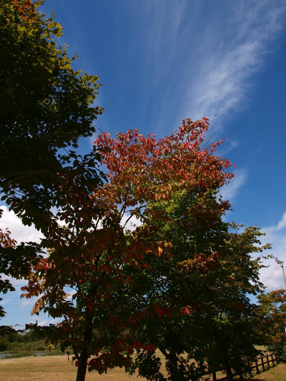 八ヶ岳ふれあい公園の紅葉