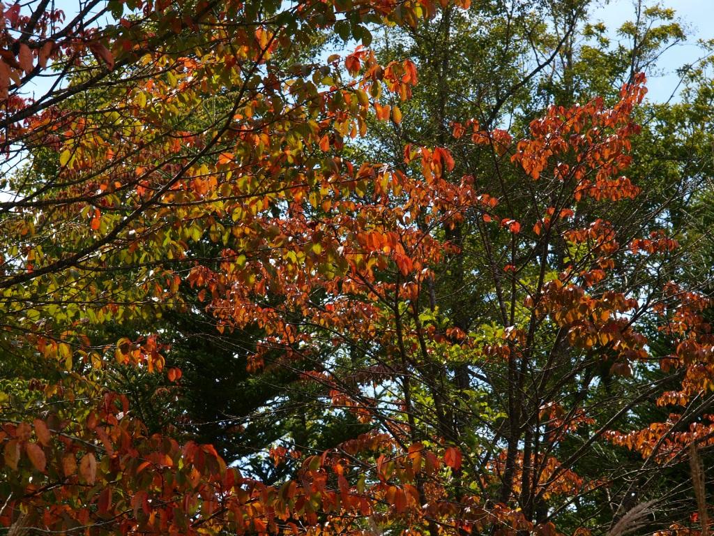 少し早い紅葉の彩