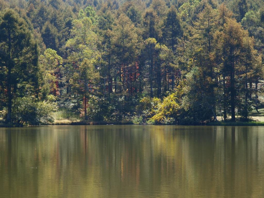 千代田湖のツタウルシ紅葉