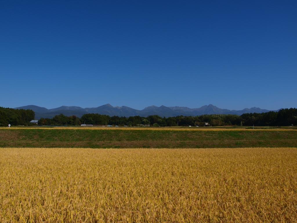 黄金色の八ヶ岳2