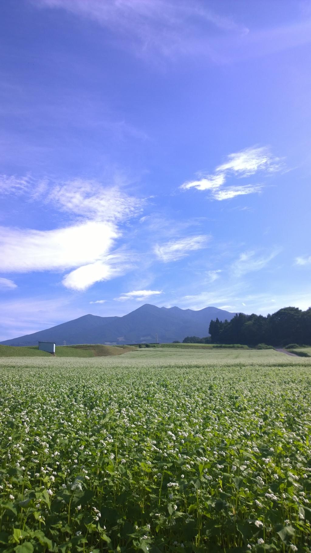 晴れた朝の蕎麦畑