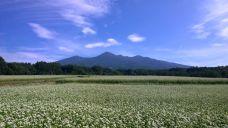 晴れた朝の蕎麦畑6