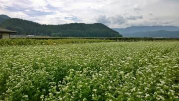 平出遺跡と蕎麦畑