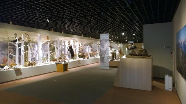 大町山岳博物館2階はく製展示1