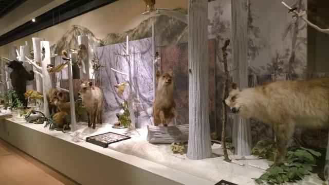 大町山岳博物館2階はく製展示2