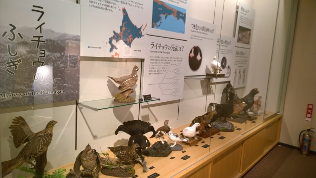 大町山岳博物館2階ライチョウ展示2