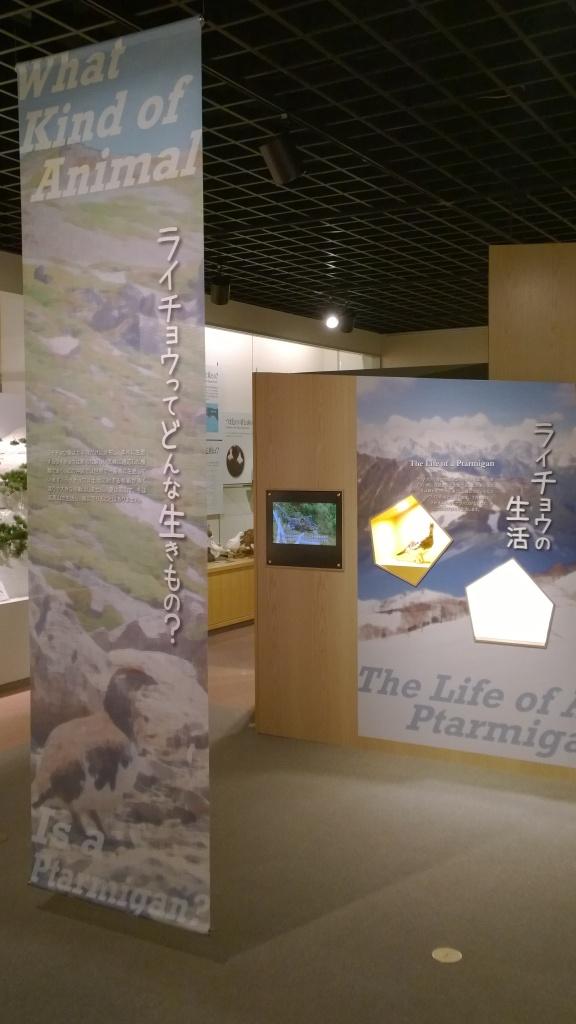 大町山岳博物館2階ライチョウ展示1