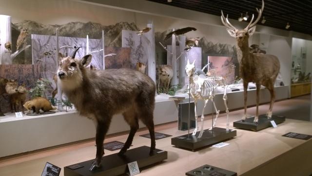 大町山岳博物館2階はく製展示3