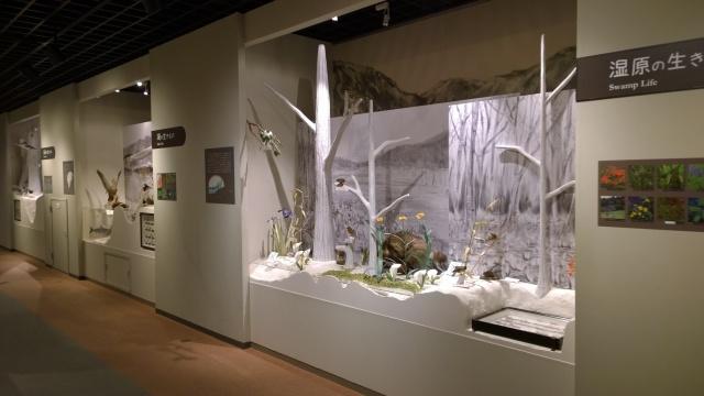 大町山岳博物館2階はく製展示4