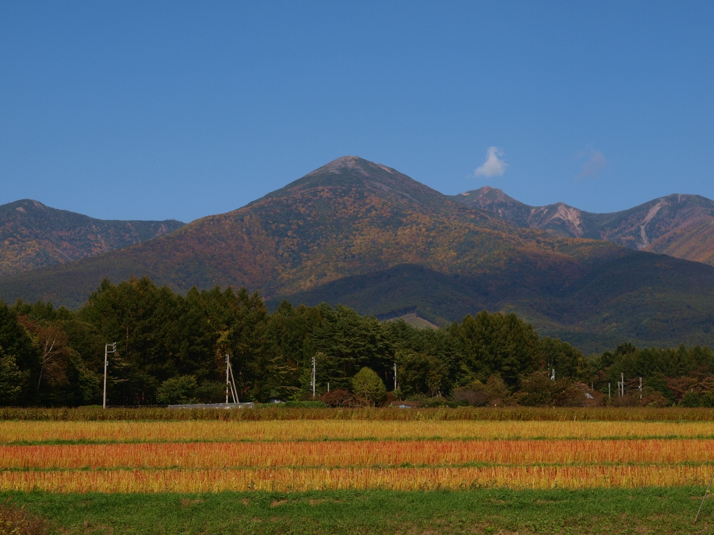 黄葉の始まった八ヶ岳2