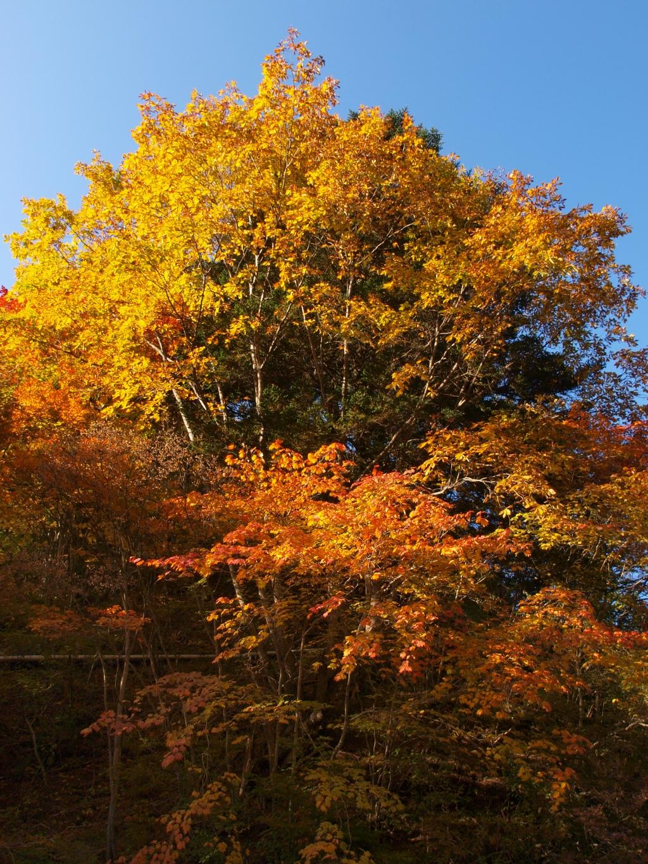 明治温泉とおしどり隠しの滝の紅葉6