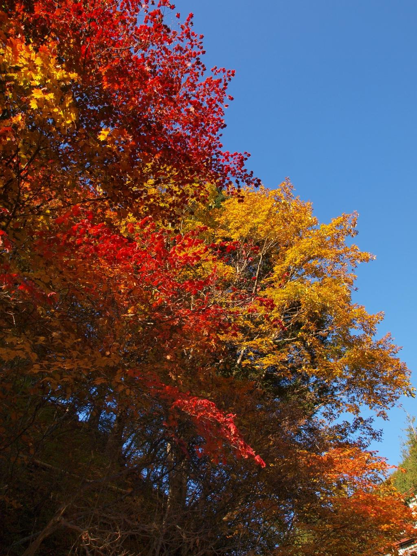 明治温泉とおしどり隠しの滝の紅葉1