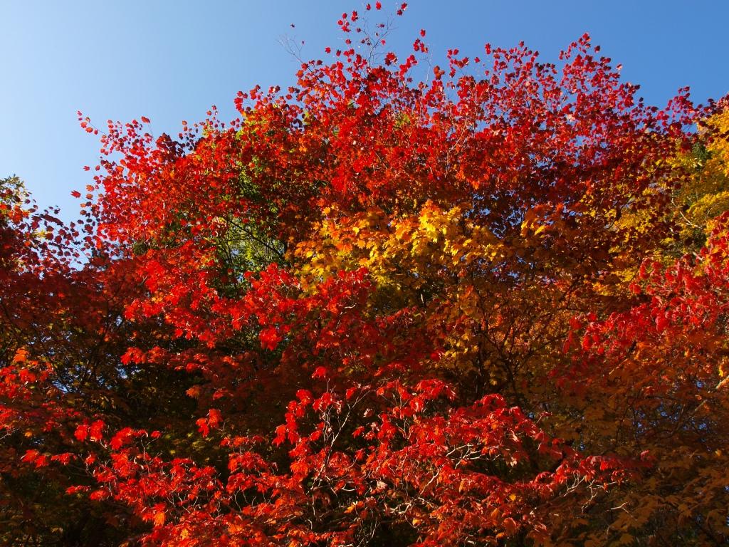 明治温泉とおしどり隠しの滝の紅葉8