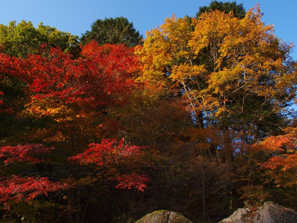 明治温泉とおしどり隠しの滝の紅葉7