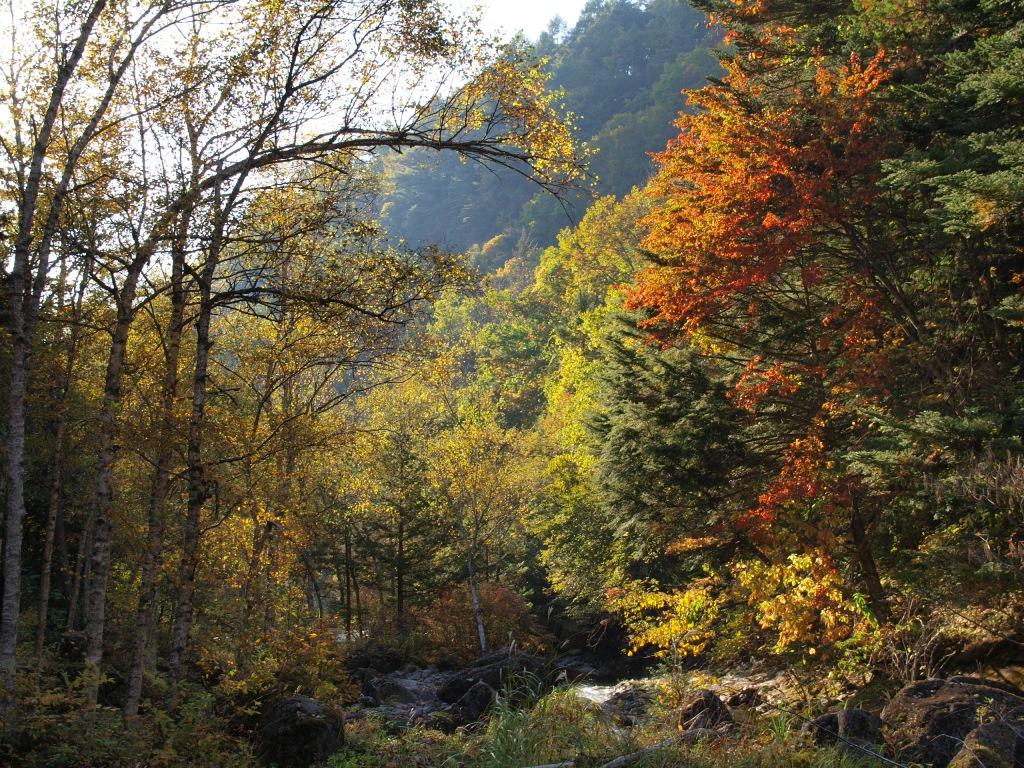 明治温泉とおしどり隠しの滝の紅葉9