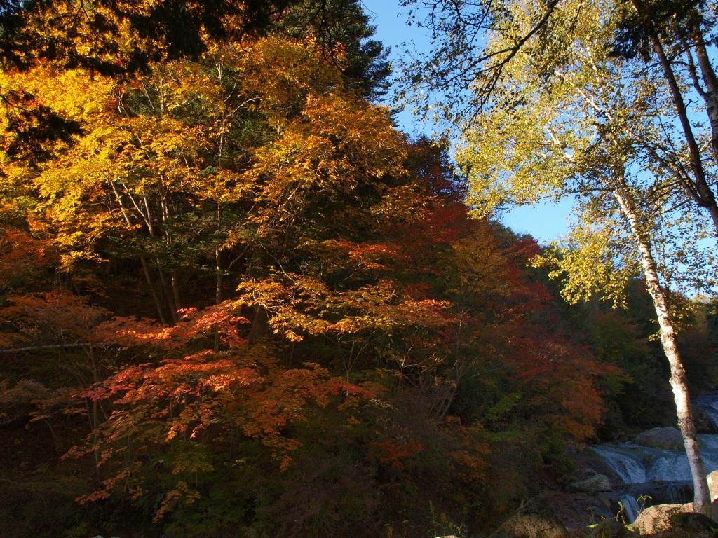明治温泉とおしどり隠しの滝の紅葉4