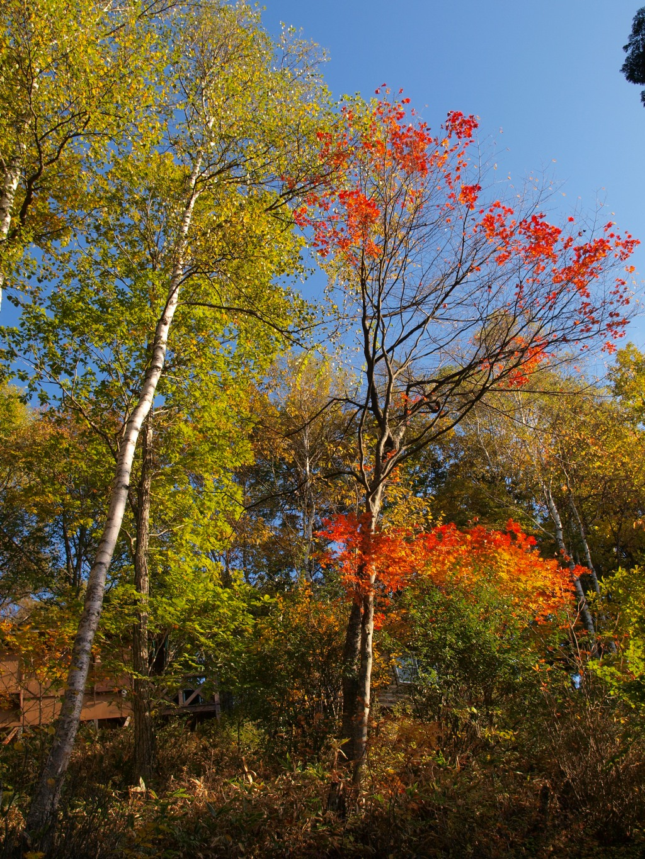 明治温泉入口の紅葉4
