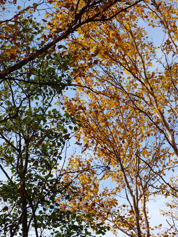 春日渓谷の紅葉20141012_4