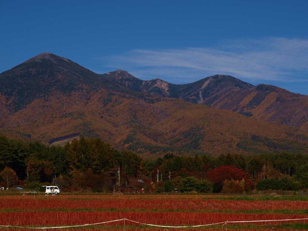 黄葉する八ヶ岳の裾2