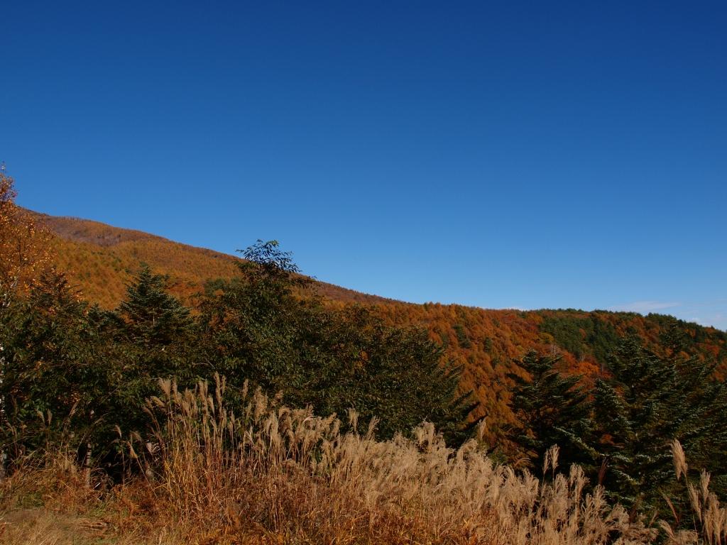 観音平の黄葉する山並み