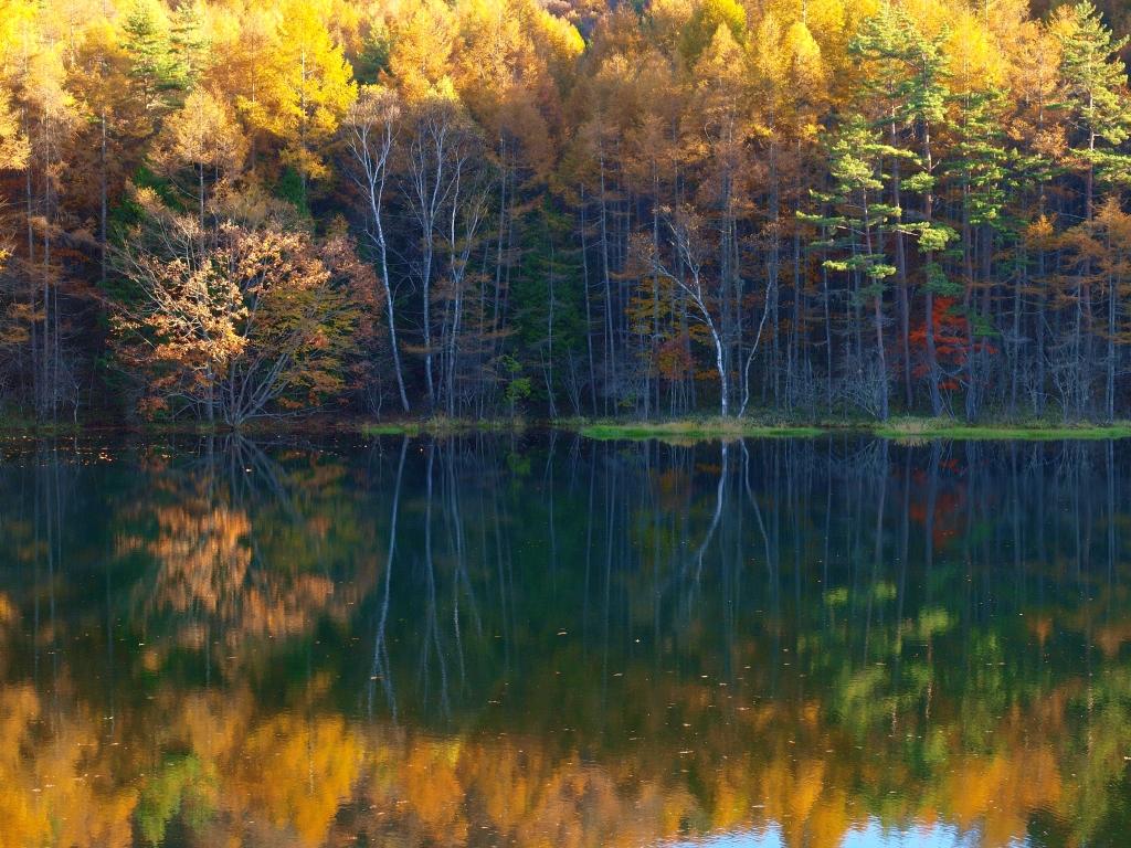 落葉松の黄葉と御射鹿池20141025_6