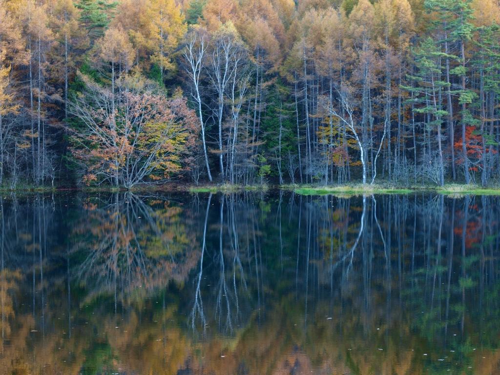 落葉松の黄葉と御射鹿池20141025_5