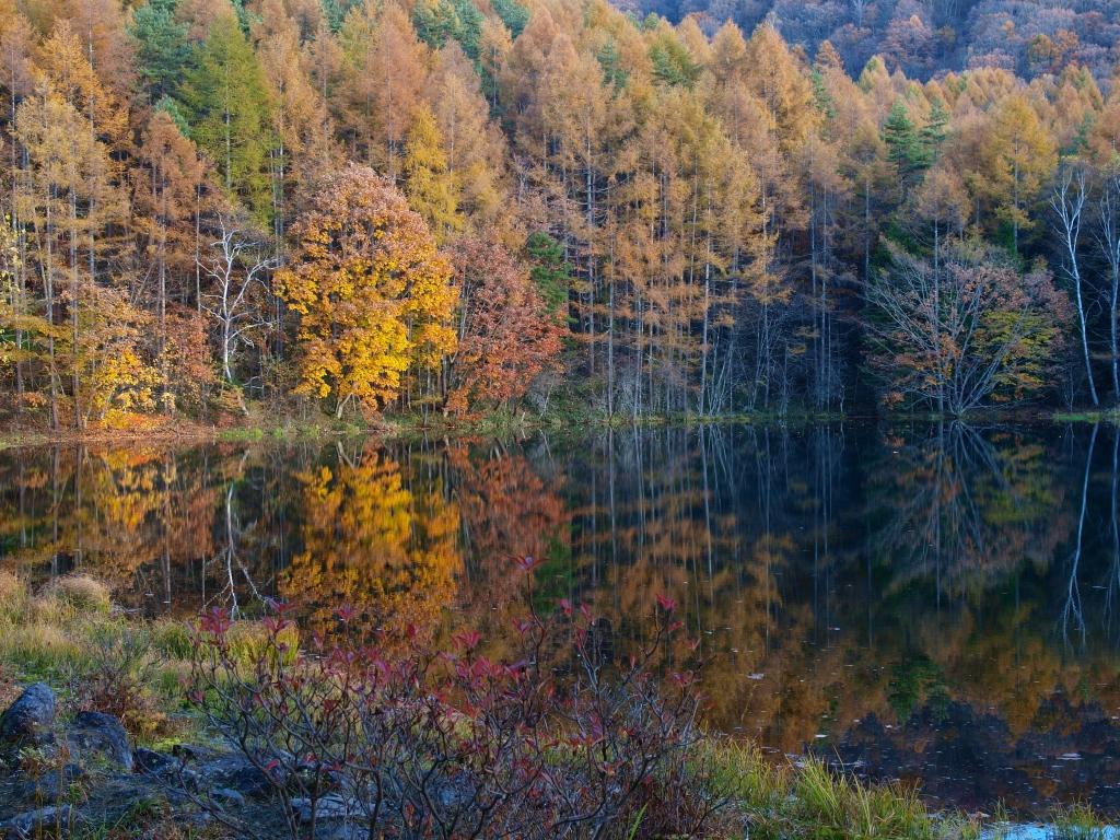 落葉松の黄葉と御射鹿池20141025_7