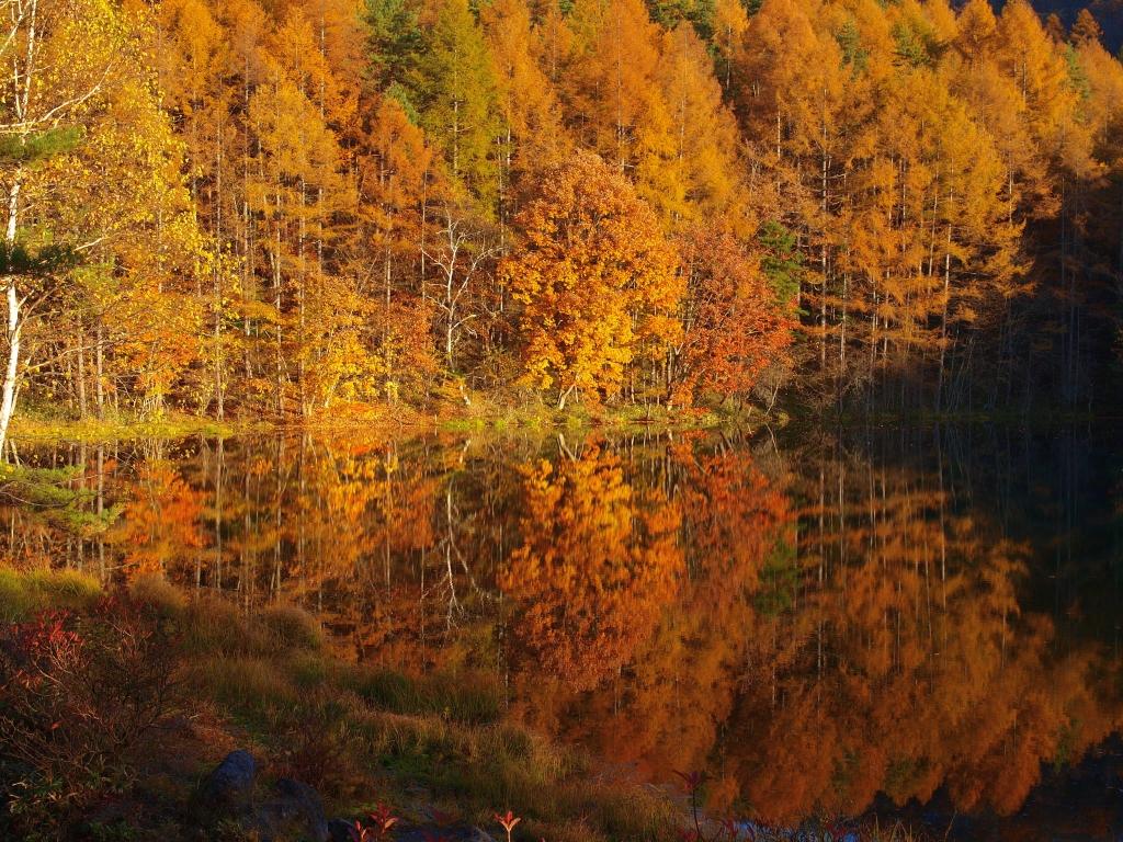 落葉松の黄葉と御射鹿池20141025_1