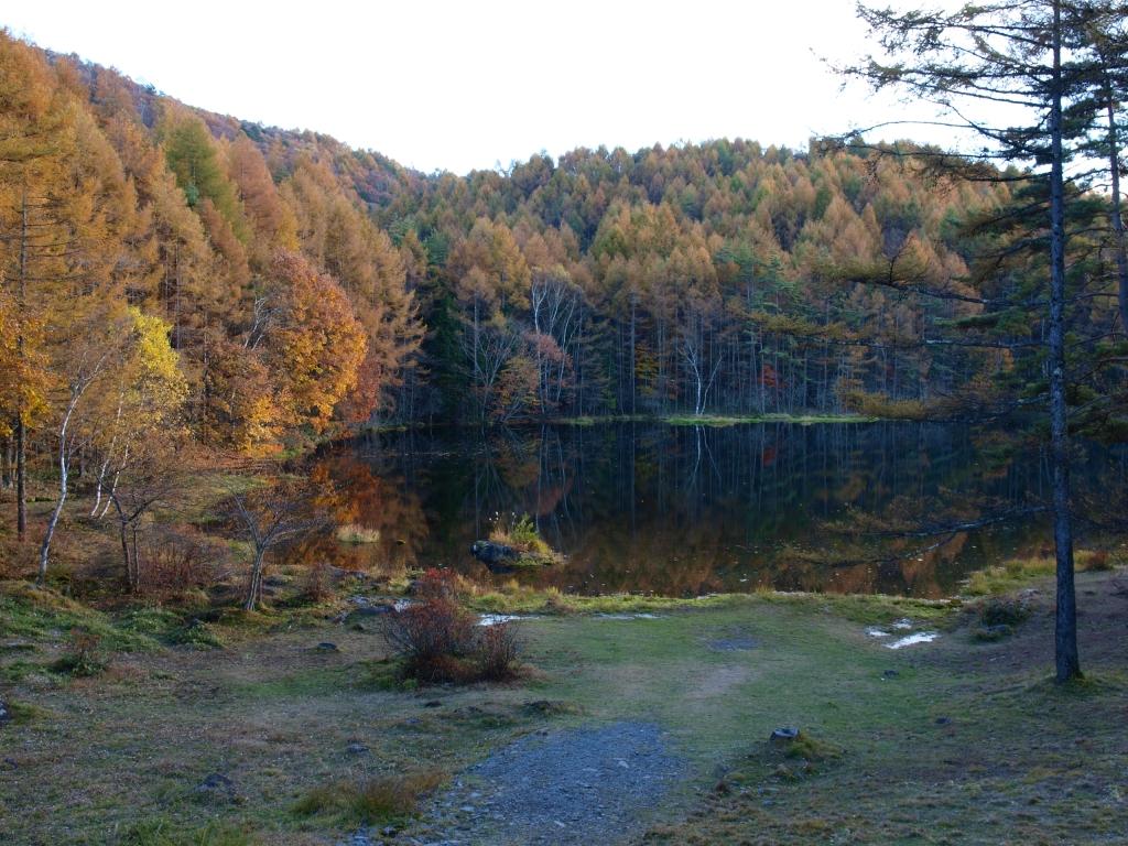 落葉松の黄葉と御射鹿池20141025_2
