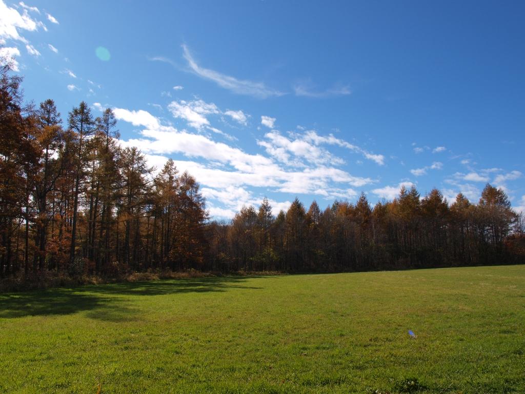 野辺山の落葉松黄葉