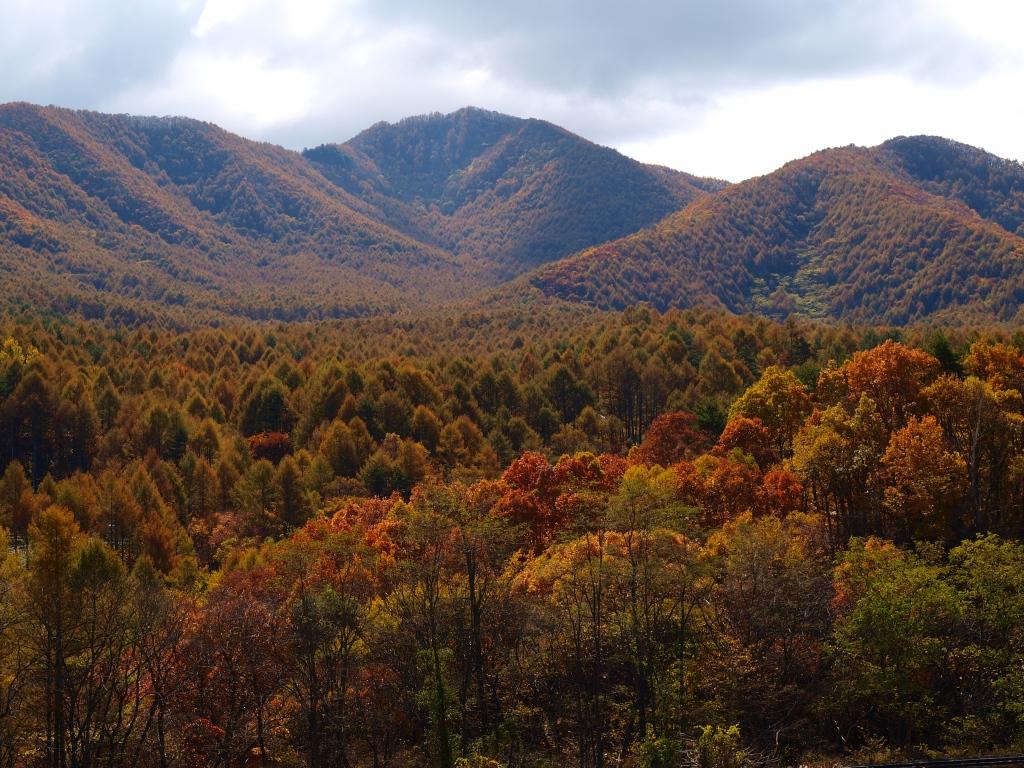 川上村から望む黄葉の女山